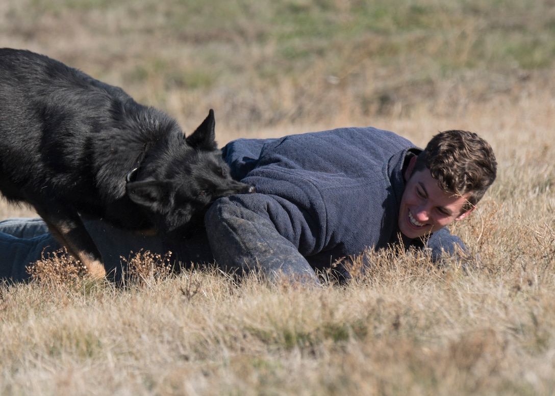 Jared Brown, Spokesman Review reporter, experiences the effectiveness of Rosso, 92nd Security Forces Squadron Military Working Dog, during a Year of the Defender media day event at Fairchild Air Force Base, Washington, Oct. 29, 2019. MWDs start their training at Lackland Air Force Base, as the U.S. Air Force manages the program that trains all the MWDs for all military branches. (U.S. Air Force photo by Senior Airman Ryan Lackey)