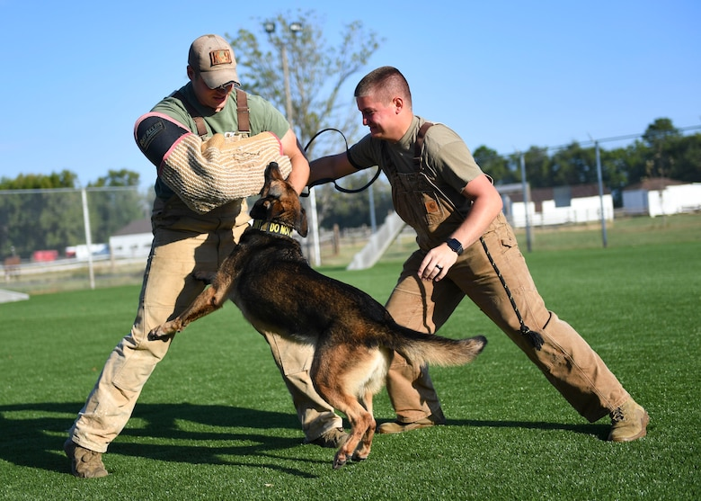 Risa, 633rd Security Forces Squadron military working dog, bites U.S. Air Force Staff Sgt. Carmen Pontello, 633rd SFS MWD trainer during bite training at Joint Base Langley-Eustis, Virginia, Sept. 27, 2019.