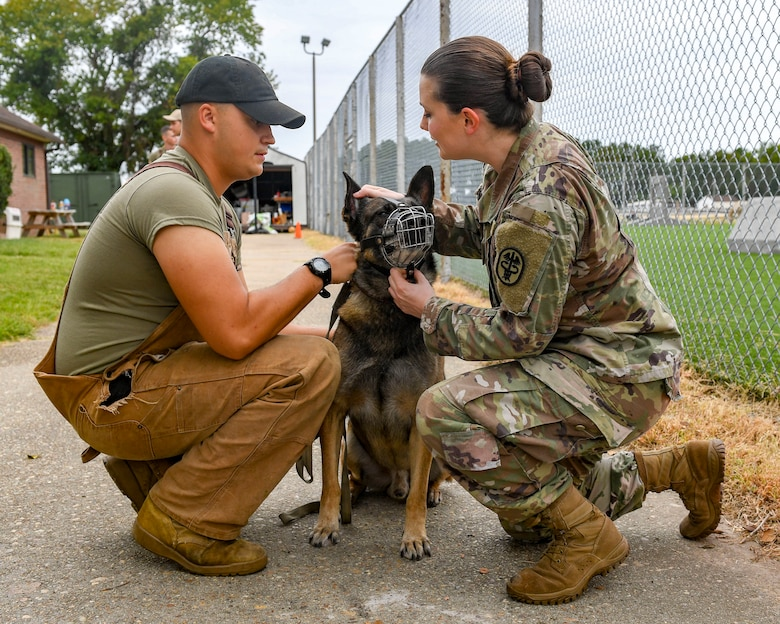 U.S. Army Capt. Jessica Rolley, Joint Base Langley-Eustis veterinarian, examines Duke, 633rd Security Forces Squadron military working dog, for ear abnormalities at JBLE, Virginia, Oct. 1, 2019.