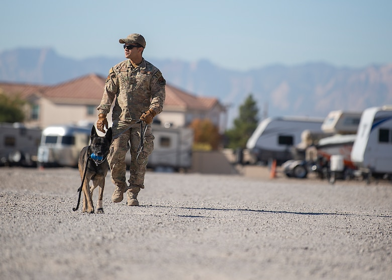 Security Forces member walks a military working dog.
