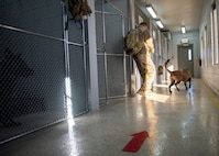 A Security Forces member walks a Military Working Dog out of the kennels.