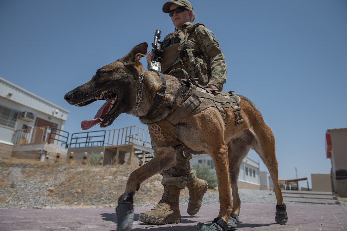 U.S. Air Force Staff Sgt. Kathyrn Malone, 386th Expeditionary Security Forces Squadron military working dog handler, walks her MWD, Uurska, while conducting a foot patrol at Ali Al Salem Air Base, Kuwait, July 24, 2019. Malone and Uurska are both deployed from the 55th Security Forces Squadron, Offutt Air Force Base, Neb. (U.S. Air Force photo by Tech. Sgt. Daniel Martinez)