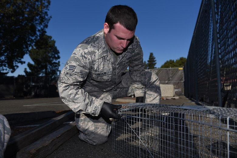 U.S. Air Force Senior Airman David De Alva, 60th Civil Engineer Squadron pest management technician, sets down a trap to catch vermin Nov. 8, 2019, at Travis Air Force Base, California. De Alva places traps around Travis to capture unwelcome critters roaming the base. (U.S. Air Force photo by Airman 1st Class Cameron Otte)