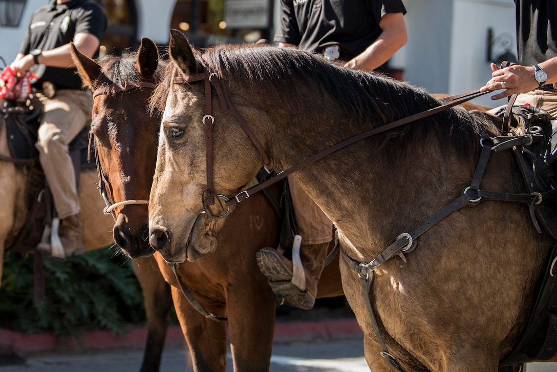 30th Security Forces Squadron Conservation unit  Military Working Horses participate in the Santa Barbara Veterans Day Parade Nov. 9, 2019, in Santa Barbara, Calif. The 30th SFS MWH law enforcement unit is the only equine patrol unit within the Department of Defense and is one of four conservation units in the U.S. Air Force. The unit patrols hard-to-reach hunting and fishing areas at Vandenberg Air Force Base, monitors delicate beach eco-systems, and participates in parades and official engagements. (U.S. Air Force photo by Airman 1st Class Hanah Abercrombie)