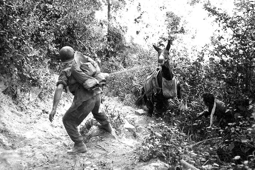 A soldier pulls the lead rope of a mule that is struggling to climb back onto a rocky trail.