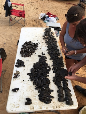 Memphis District Dive Team looks for mussels on Florida river