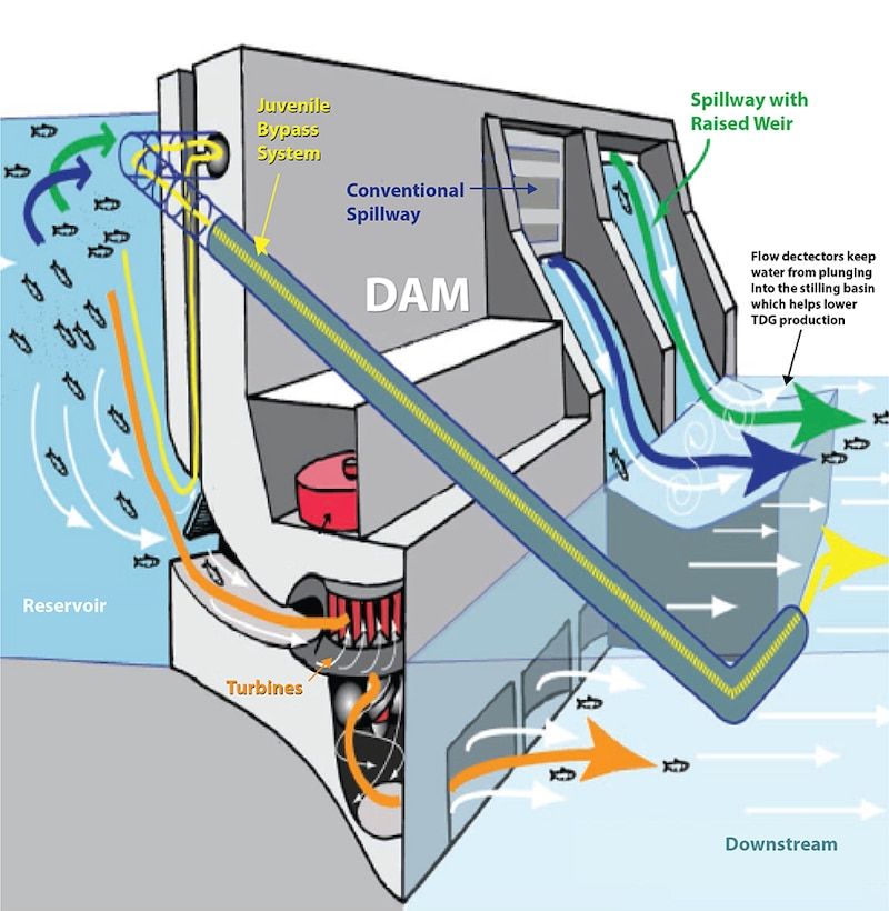 In addition to several fish passage systems in place at the lower Columbia River and lower Snake River dams, spillway deflectors produce a more horizontal spill flow and limit the plunge depth of water over the dam spillway. This reduces the amount of entrained nitrogen that creates total dissolved gas, or TDG.