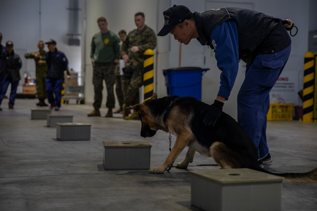 U.S. Marines and JMSDF Soldiers conduct MWD detection training exercises