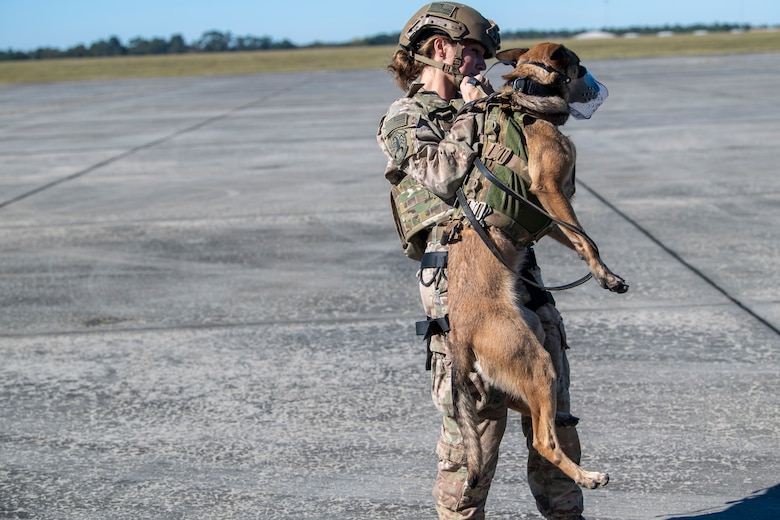 A photo of a military working dog handler testing her dog's safety harness