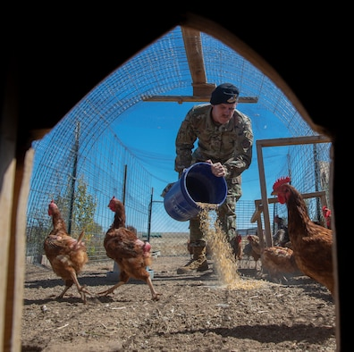 Tech. Sgt. Michael Jones, 50th Space Wing Inspector General's office wing exercise section chief, feeds chickens at his farm in Ellicott, Colorado, Sept. 30, 2019. Despite growing up in the suburbs, Jones works on a farm in his free time to relieve stress. (U.S. Air Force photo by Airman 1st Class Jonathan Whitely)