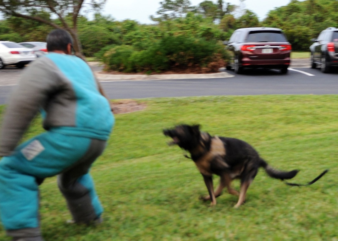 Staff Sgt. Randle Williams, military working dog handler, participates in an exercise with military working dog, Digo, on Oct. 7, 2019, at Clubhouse Park in Viera, Fla. MWD handlers from the 45th Space Wing put on a K9 demonstration for a Cub Scout pack to showcase the skills, training and bond bewtween handler and military working dog. (U.S. Air Force photo by Maggie Nave)