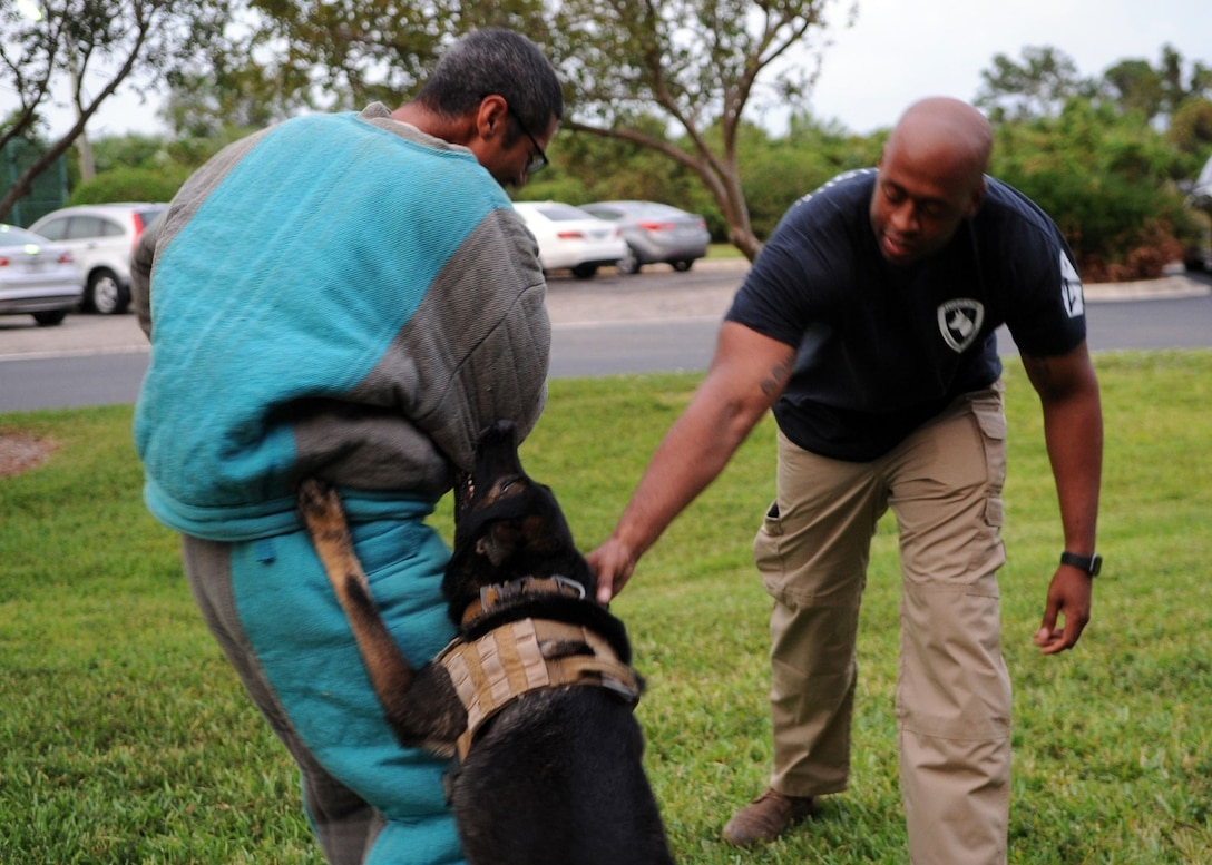 Staff Sgt. Randle Williams and Staff Sgt. Akeen McKinnon, military working dog handlers, showcase some bite training with military working dog, Digo, on Oct. 7, 2019, at Clubhouse Park in Viera, Fla. MWD handlers from the 45th Space Wing put on a K9 demonstration for the Cub Scout pack to show the skills, training and bond bewtween handler and military working dog. (U.S. Air Force photo by Maggie Nave)
