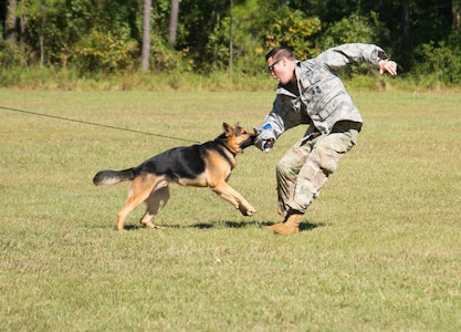 Staff Sgt. Jake Mikell, a military working dog handler assigned to the 628th Security Forces Squadron, and military working dog Kantor demonstrate how a military working dog is trained, October 23, 2019, at Marrington Elementary School on Joint Base Charleston, S.C. Mikell was at the school, along with other security forces members, to exhibit how the military working dogs are taught to defend and search for drugs. Members of Team Charleston were at the school to educate students about drug prevention during Red Ribbon Week. Red Ribbon Week, which takes place October 23-31, is an awareness program that began in 1985 as a way to show opposition to drugs as stated by the Get Smart About Drugs foundation.