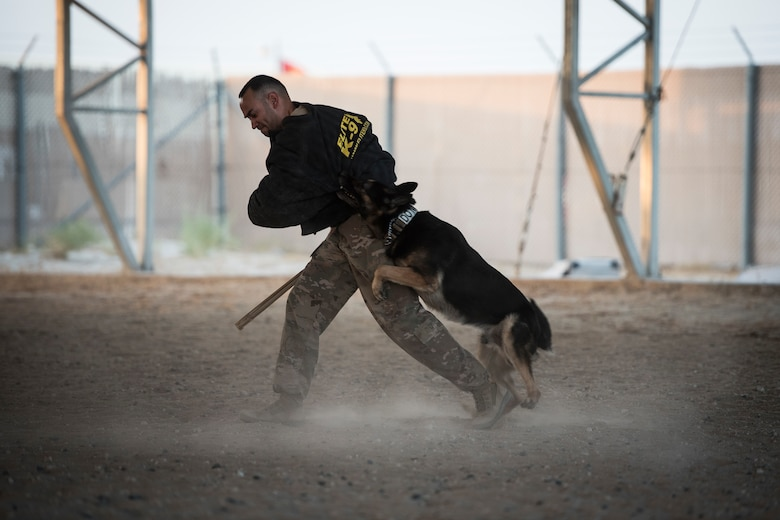 Military working dog works with handler during tactics demonstration.