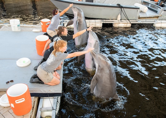 Navy trainers reinforce positive behavior with bottlenose dolphins during a recent visit to Naval Surface Warfare Center Panama City Division.