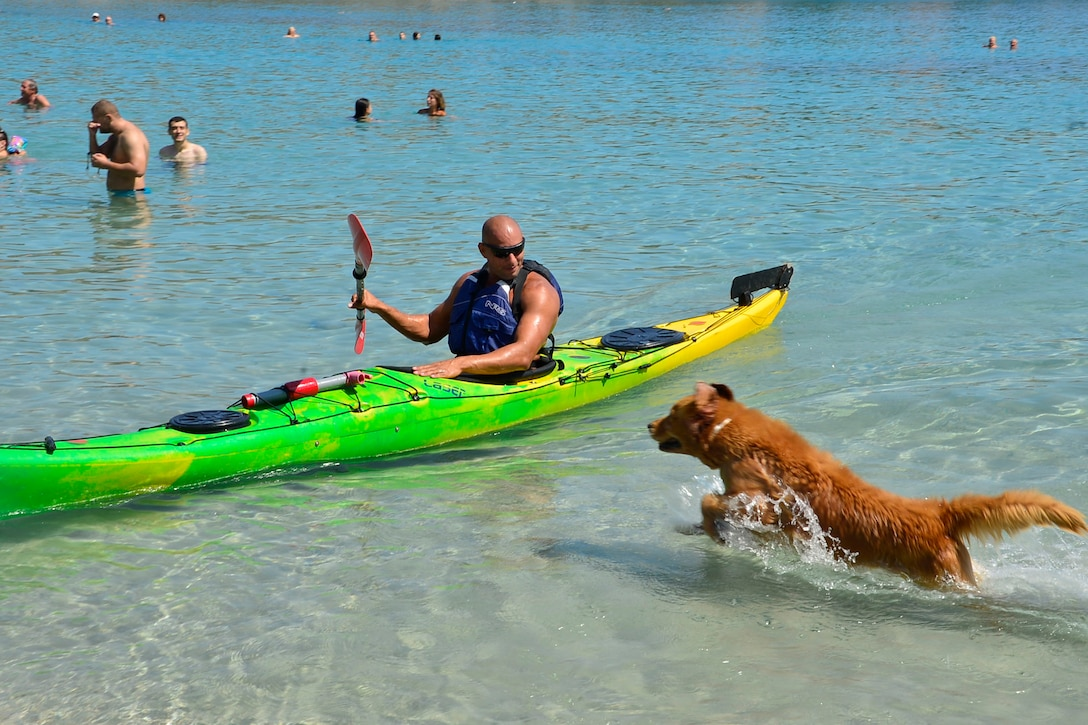 Man in a green kayak is greeted at shore by a brown dog running toward him.
