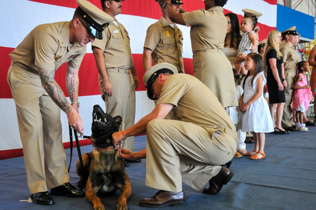 A sailor kneels next to a do while pinning something to his collar; another sailor hods the dog by a leash.