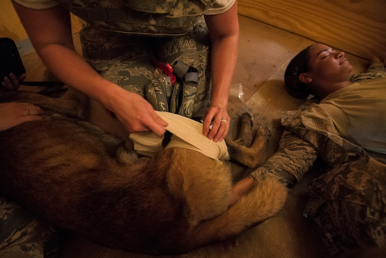 A medical technician bandages a Military Working Dog after a simulated attack at the Cannon Air Force Base Medic Rodeo, Melrose Air Force Range, N.M., Sept. 18, 2019. The Medic Rodeo is designed to test the skills of Air Force medical technicians in both deployed and home installation environments. (U.S. Air Force photo by Senior Airman Vernon R. Walter III)