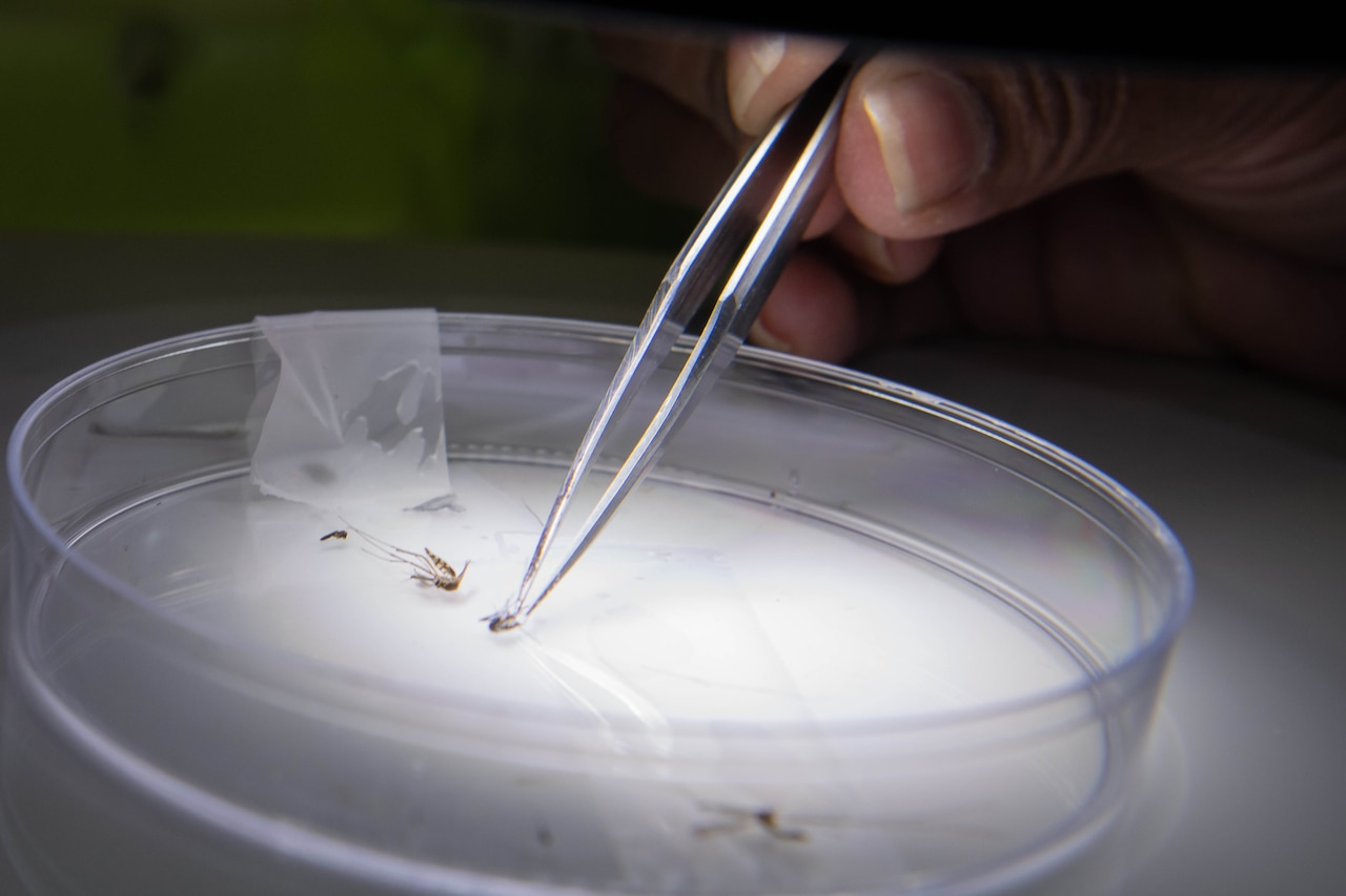 A hand uses tweezers to manipulate the contents of a petri dish.