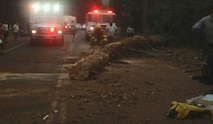 Tree involved in the accident