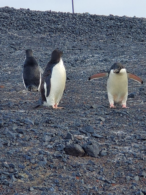 Penguins near the McMurdo Station where Maj. Esther Lee, a chaplain, worked and lived for two months, supporting the National Science Foundations efforts, Antarctica