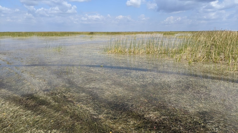 Submerged Aquatic Vegetation regenerates at Cochrans Pass on Lake Okeechobee
