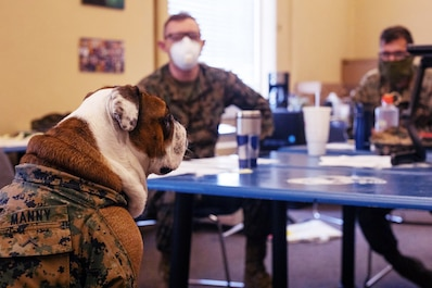 Pfc. Manny, the Marine Corps Recruit Depot, San Diego (MCRDSD) mascot, goes over quarantine plans with members of the Marine Band San Diego at MCRDSD, April 12, 2020.