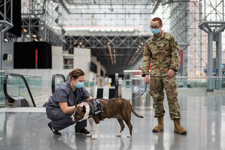 A soldier works with a service dog.