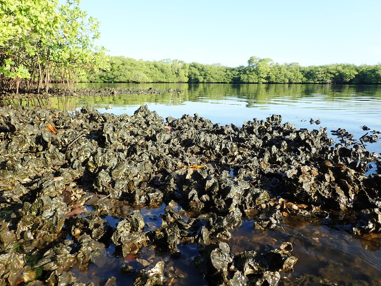 Loxahatchee River oyster monitoring