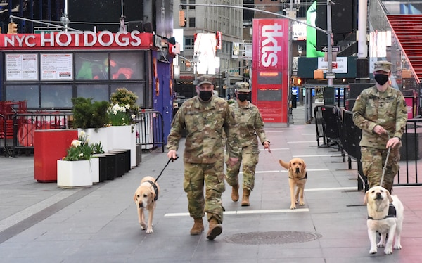 Members of the New York Army National Guard walk in Times Square with Labrador retriever service dogs provided by Puppies Behind Bars April 23, 2020. Puppies Behind Bars is a nonprofit organization that trains prison inmates to raise service dogs for wounded war veterans and first responders, as well as explosive-detection canines for law enforcement.