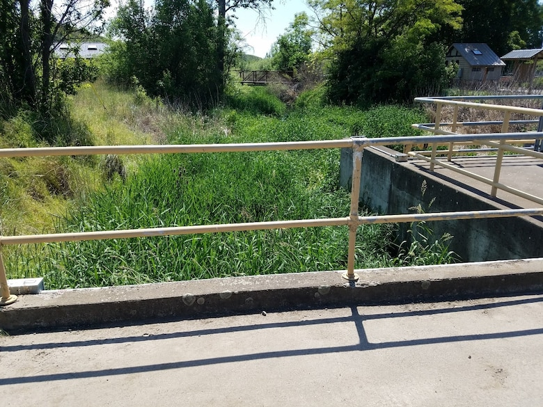 looking down from a bridge into a creek which is completely obscured by tall grass