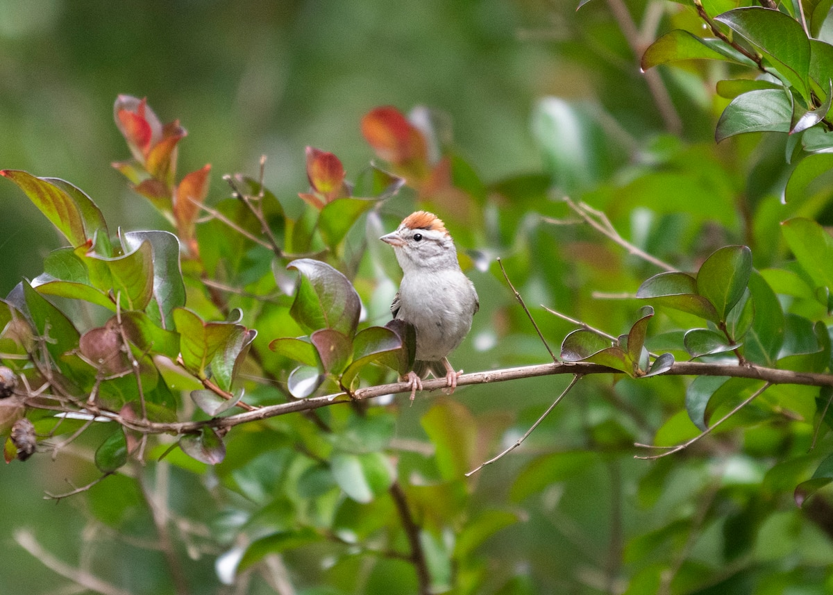 Photograph of a bird perched on a tree branch taken using a f / 2.8 aperture.