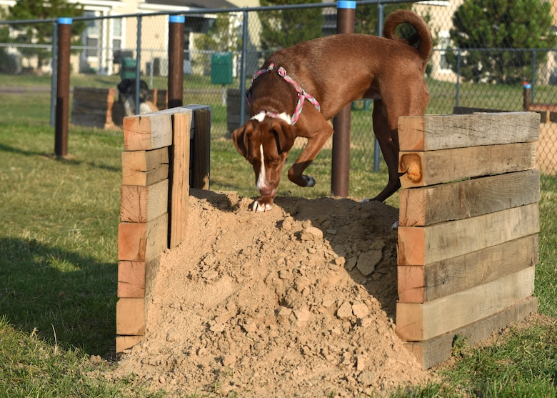 Remi, checks out the new obstacles at the dog park on Buckley Air Force Base, Colo., Aug. 4, 2020. New ramps, hurdles, tunnels and poles to weave through were installed by a local Eagle Scout as part of a community project. (U.S. Air Force photo by Airman 1st Class Haley N. Blevins)