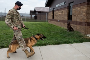 U.S. Air Force Tech. Sgt. Benjamin Vanney, 509th Security Forces Squadron Military Working Dog trainer, walks to the kennels with MWD Oscar, assigned to the 509th SFS at Whiteman Air Force Base, Missouri, Aug. 7, 2020. Oscar became the newest and youngest MWD for Whiteman AFB after graduating the Military Working Dog Course at Lackland AFB, Texas. (U.S. Air Force photo by Airman 1st Class Christina Carter)