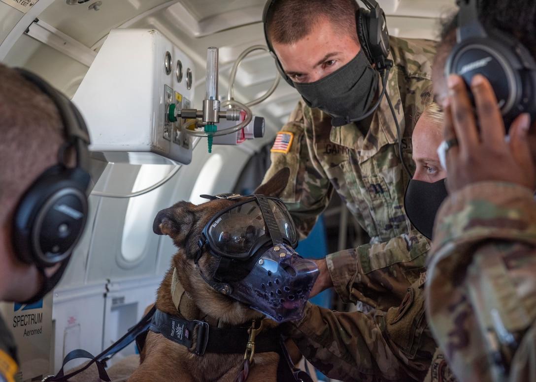 Airmen, Soldiers train on K-9 Aeromedical Evacuations capabilities