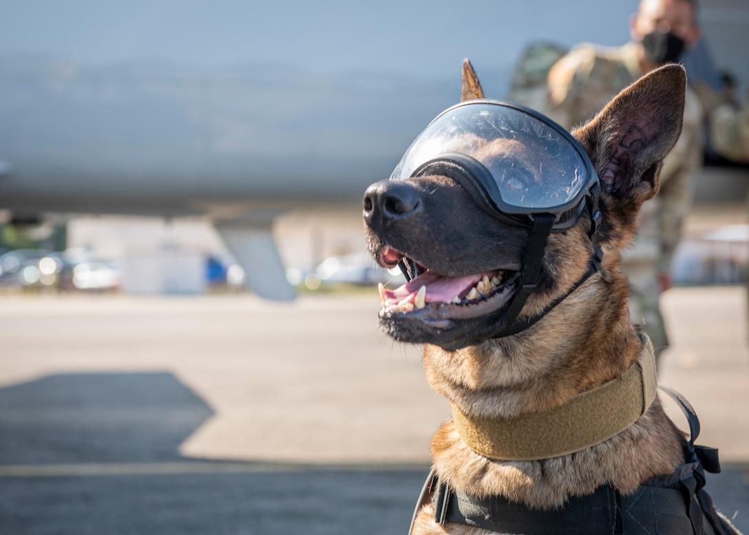 Airmen, Soldiers train on K-9 Aeromedical Evacuation Capabilities