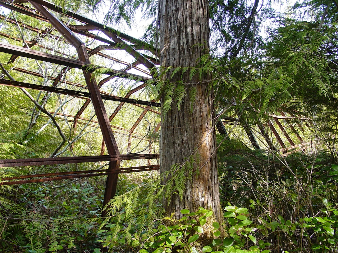 An abandoned Quonset hut sits in a grove of trees on Annette Island. Metal roofs and wood floors were stripped from similar facilities to repurpose, but the structures were abandoned.