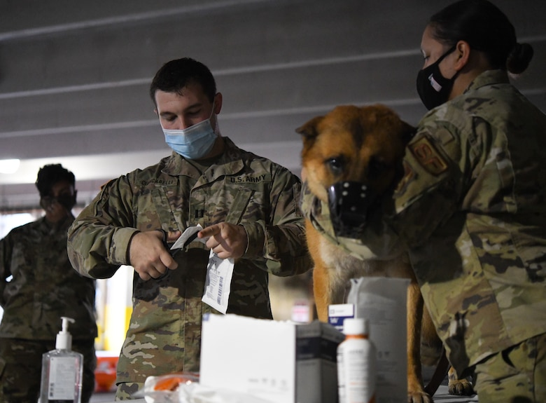 U.S. Army Capt. William Ciancarelli, course instructor and Joint Base Andrews Veterinary Clinic officer in charge, prepares a bandage for Rony, military working dog, to show 316th Medical Group members how to aid wounded MWDs in deployed conditions during a Canine Tactical Combat Casualty Care Course at Malcolm Grow Medical Clinics and Surgery Center at Joint Base Andrews, Md., Nov. 12, 2020.