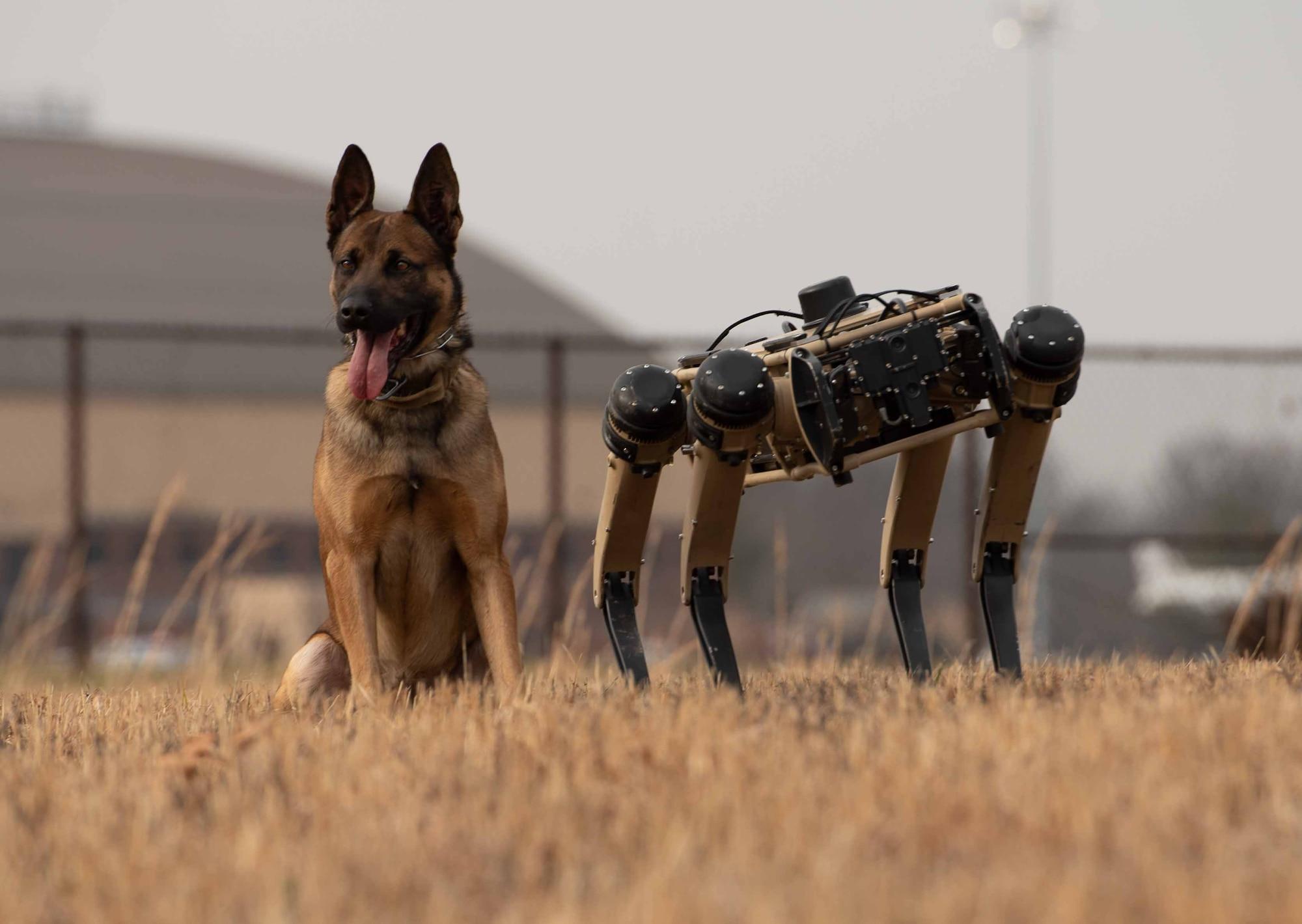 Robot dog and K-9 stand together
