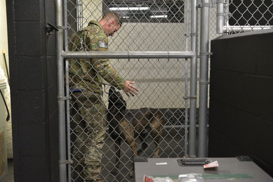Staff Sgt. Kyle Pethtel, 45th Security Forces Squadron military working dog handler, greets Pieter, his military working dog, at Patrick Air Force Base, Fla., Nov. 26, 2019. Pethtel and Pieter have been a MWD team since July 2019. (U.S. Air Force photo by Senior Airman Dalton Williams)