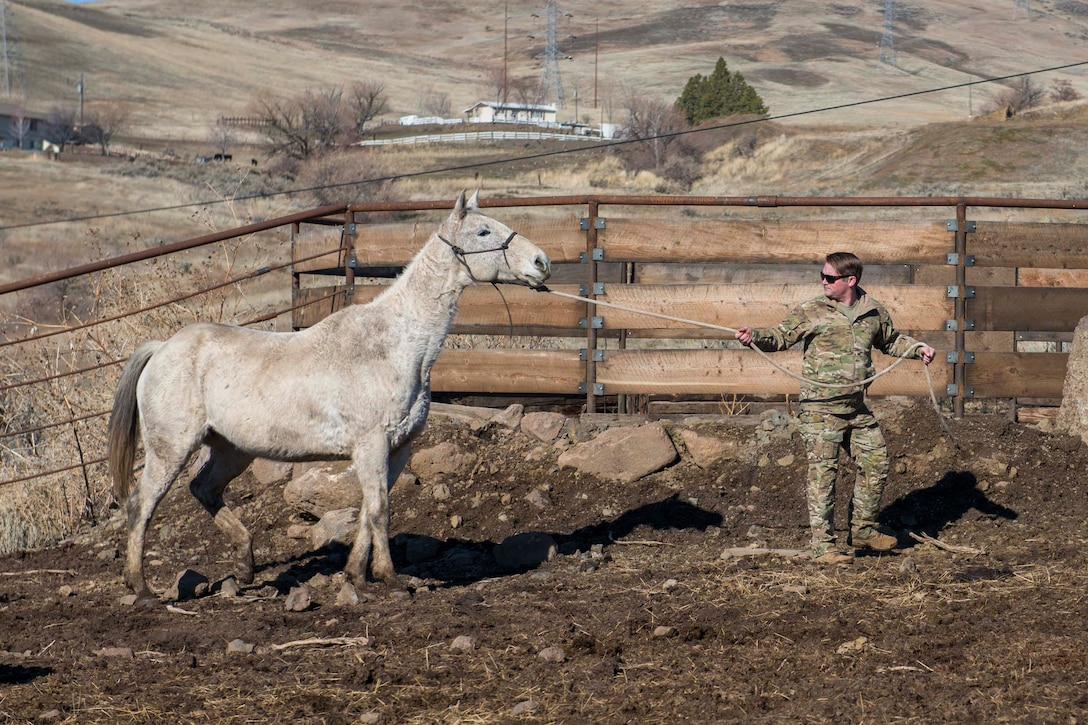 An airman pulls a horse by a rope.
