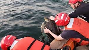 Tyler McSwain and Luke Welker, crew members assigned to USNS William Mclean (T-AKE 12), remove abandoned fishing nets from a sea turtle found entangled in the marine debris in the Arabian Sea Feb. 3, 2020. William Mclean is deployed to the U.S. 5th Fleet area of operations in support of naval operations to ensure maritime stability and security in the Central Region, connecting the Mediterranean and Pacific through the Western Indian Ocean and three strategic choke points.