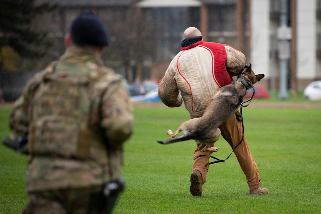 A military working dog jumps up and bites an airman during a demonstration.