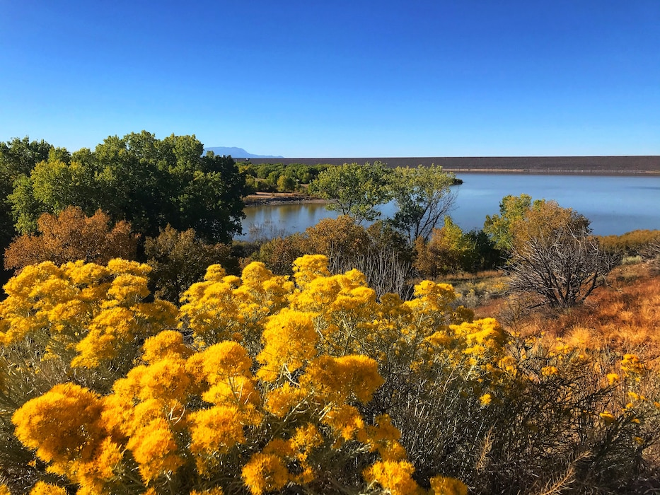 Fall colors along the shore of Cochiti Lake in the early morning sun, Oct. 13, 2019. Photo by Karyn Matthews.