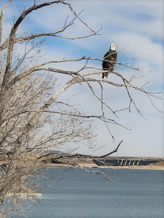 An eagle sits on a tree at the Conchas Dam South Recreation Area, Feb. 6, 2020. Photo by Nadine Carter.