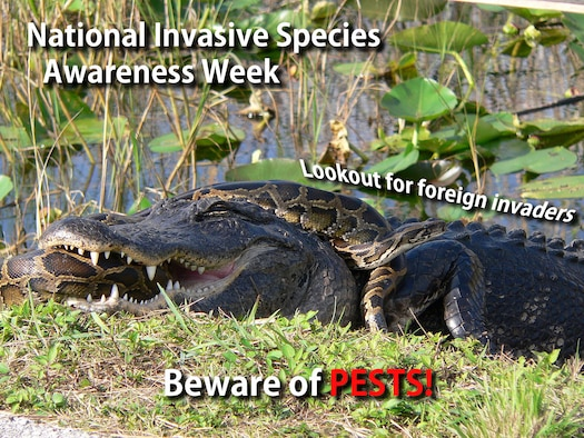 National Invasive Species Awareness Week is an annual observance when people all around the country take time to raise awareness and come up with solutions for the effects that non-native species can have on local communities and ecosystems. (U.S. Air Force photo by Senior Airman Stefan Alvarez)