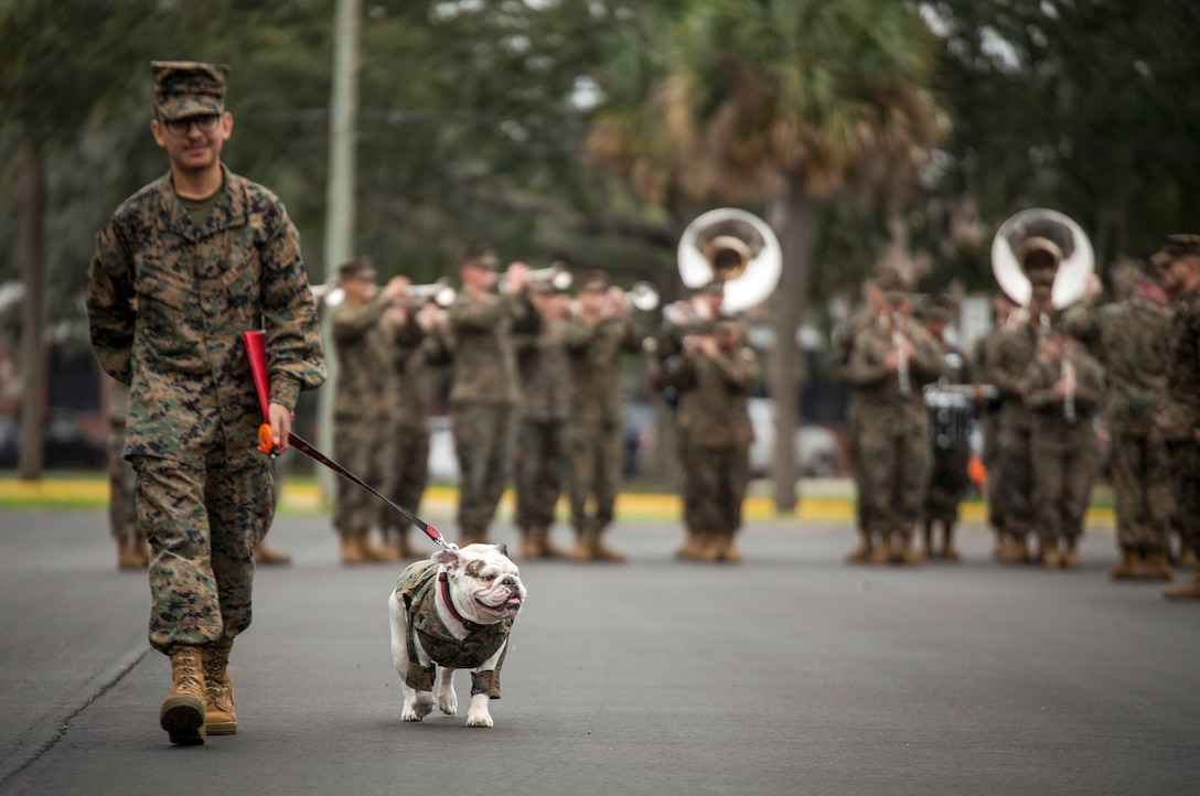 A Marine walks with a dog on a leash as Marine Corps musicians perform in the background.