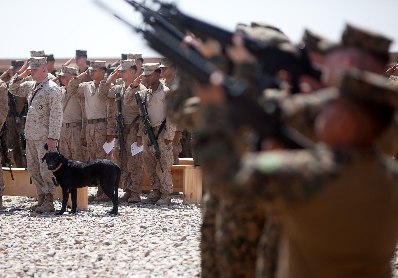 Four blurred-out Marines aim their rifles toward the sky. In focus in the background, a black dog looks on as several more Marines salute.
