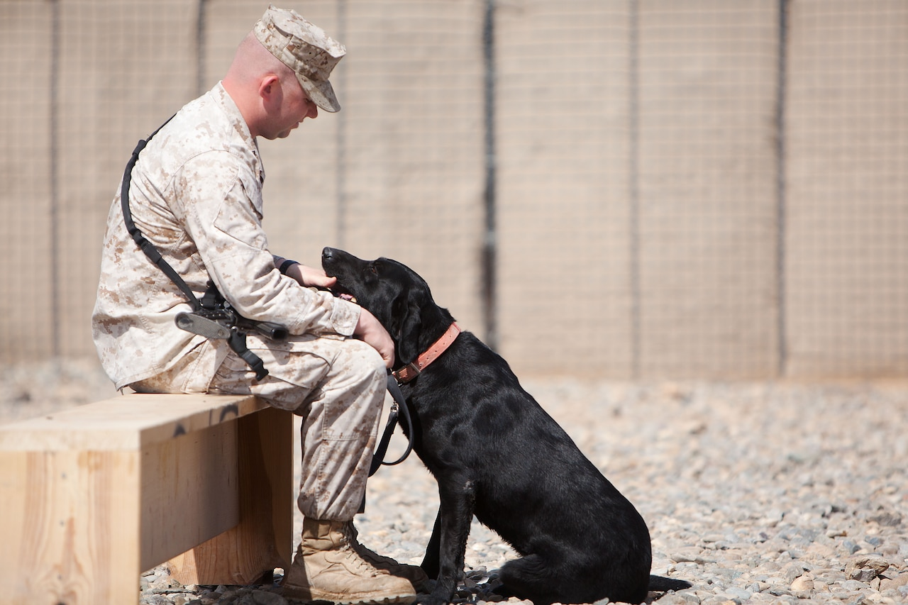 A Marine sits on a wooden bench in gravel, petting a black Labrador retriever whose chin is in the Marine's lap.