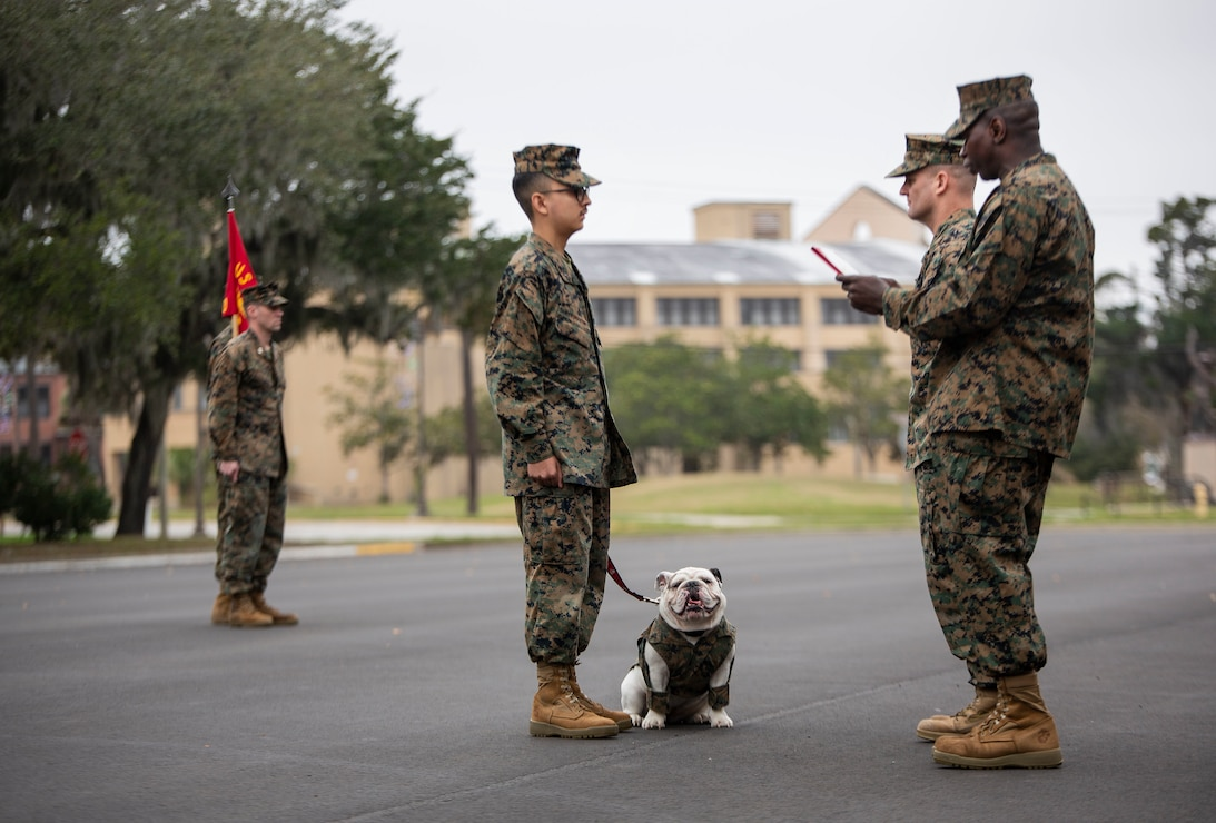 Marine Corps Recruit Depot Parris Island's mascot is read her promotion warrant during a battalion formation on Parris Island, S.C., Jan. 3.